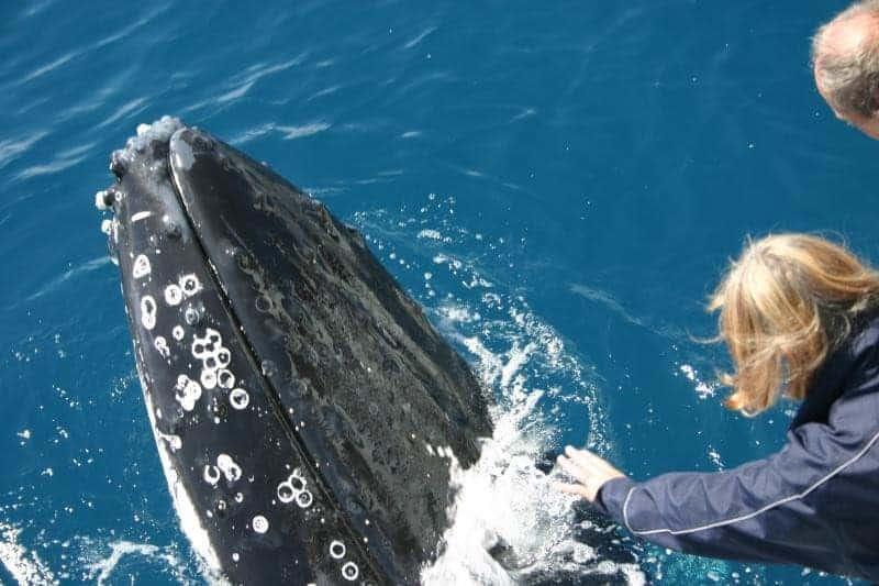 Humpback Whale Breathing