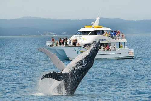 Whalesong cruises