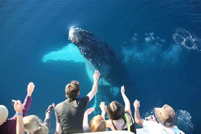 Whale Breaching Tasman