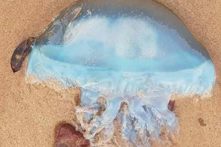 Top 5 Most Dangerous Sea Creatures in the Australian Ocean