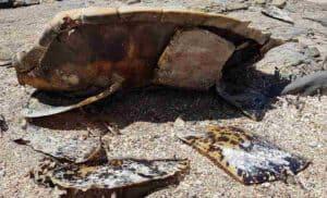 Sea Turtle Found Dead