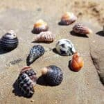 Best Beaches for Shells in Queensland