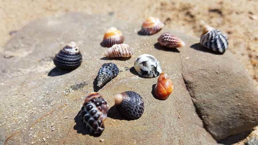 Best Beaches for Shells in Queensland
