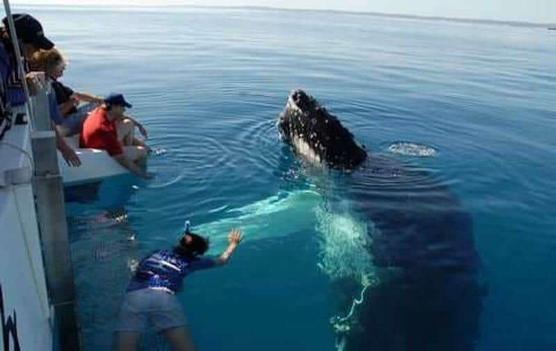 Whale Watching in Hervey Bay!