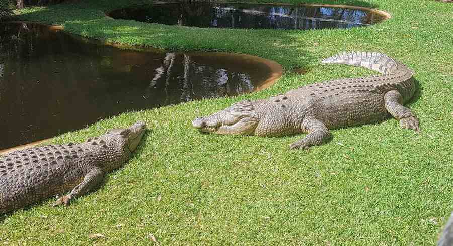 Are There Crocodiles in Hervey Bay?