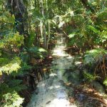 Fraser Island Great Walk