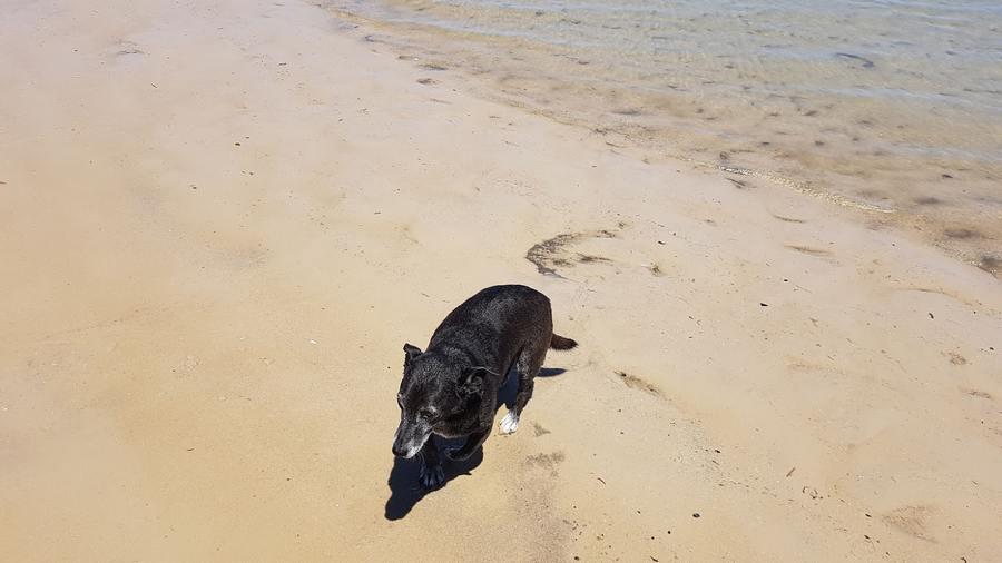 Dog at Beach Woodgate