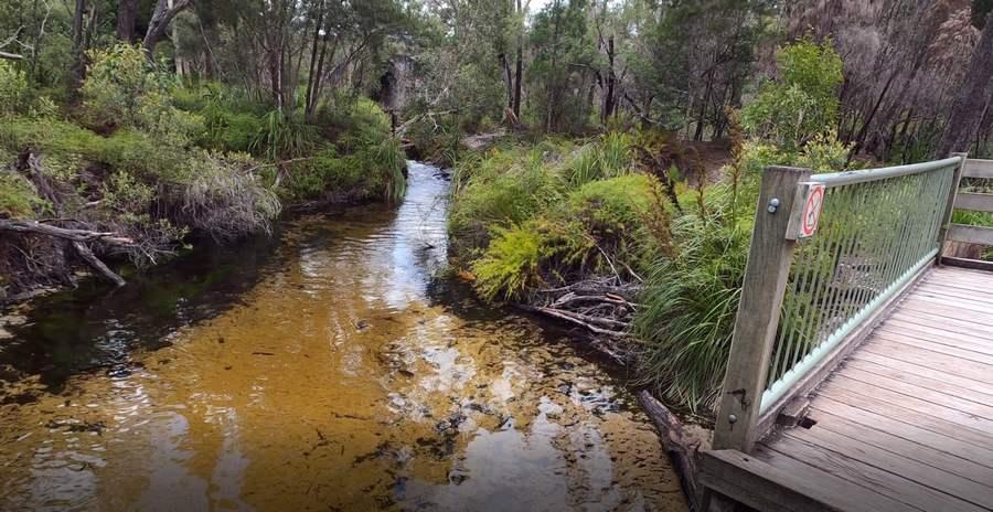 Seary's Creek