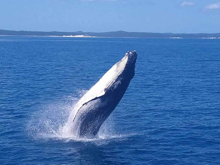 What Is The Best Whale Watching Tour In Hervey Bay?