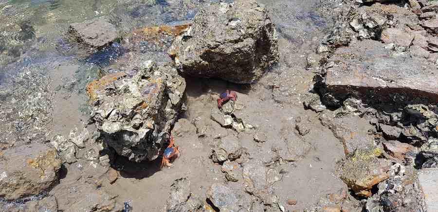 Buxton Crabs