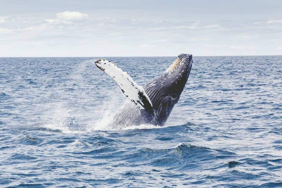 When Can You See Whales In Hervey Bay
